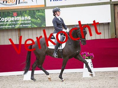 Horsefood Dressuur Talent 2017 © DigiShots
